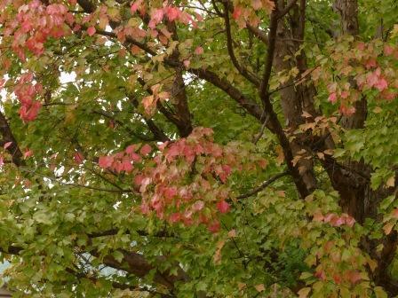 道後公園の紅葉 3