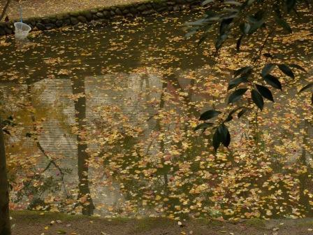 道後公園 内堀に落ちた黄葉・紅葉