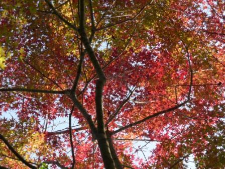 松山総合公園 紅葉・黄葉 2