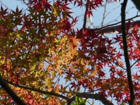 松山総合公園 紅葉・黄葉 3