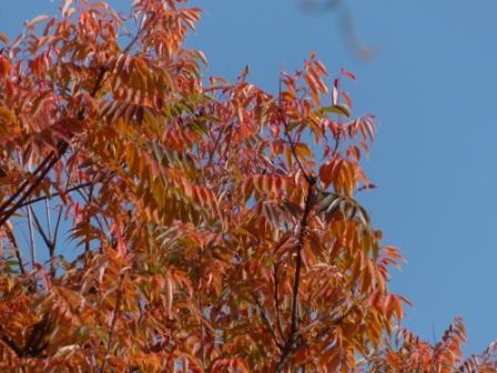 松山総合公園 紅葉・黄葉 8