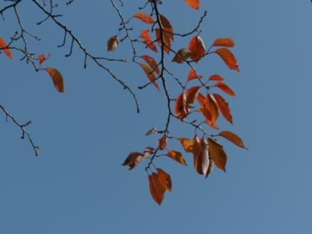 松山総合公園 紅葉・黄葉 10