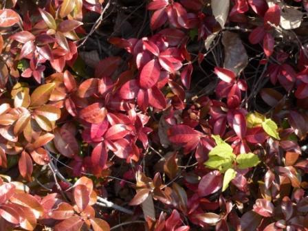 松山総合公園 紅葉・黄葉 12