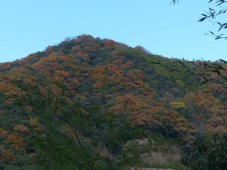 山の紅葉 1