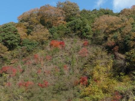 山の紅葉 3