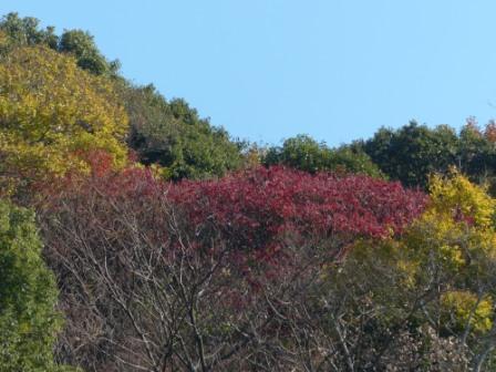 道後公園 紅葉