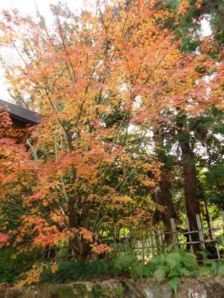 牧野植物園 紅葉 1