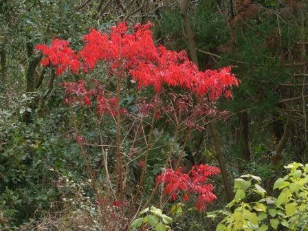 牧野植物園 紅葉 2