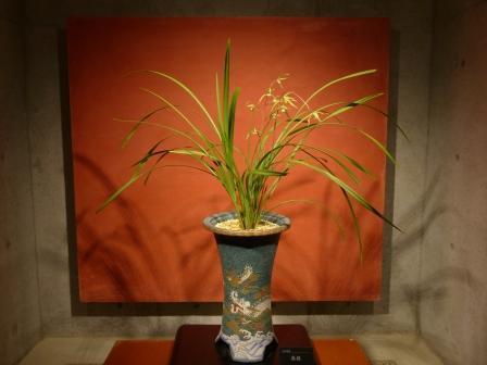 牧野植物園 台湾寒蘭 無銘