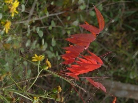 牧野植物園 紅葉 3
