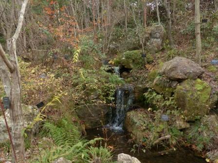 牧野植物園 土佐の植物生態園