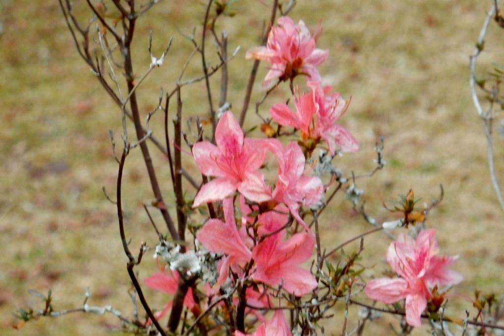 嵐山紅葉2016 026