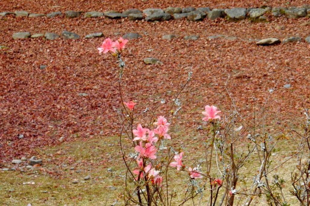 嵐山紅葉2016 033