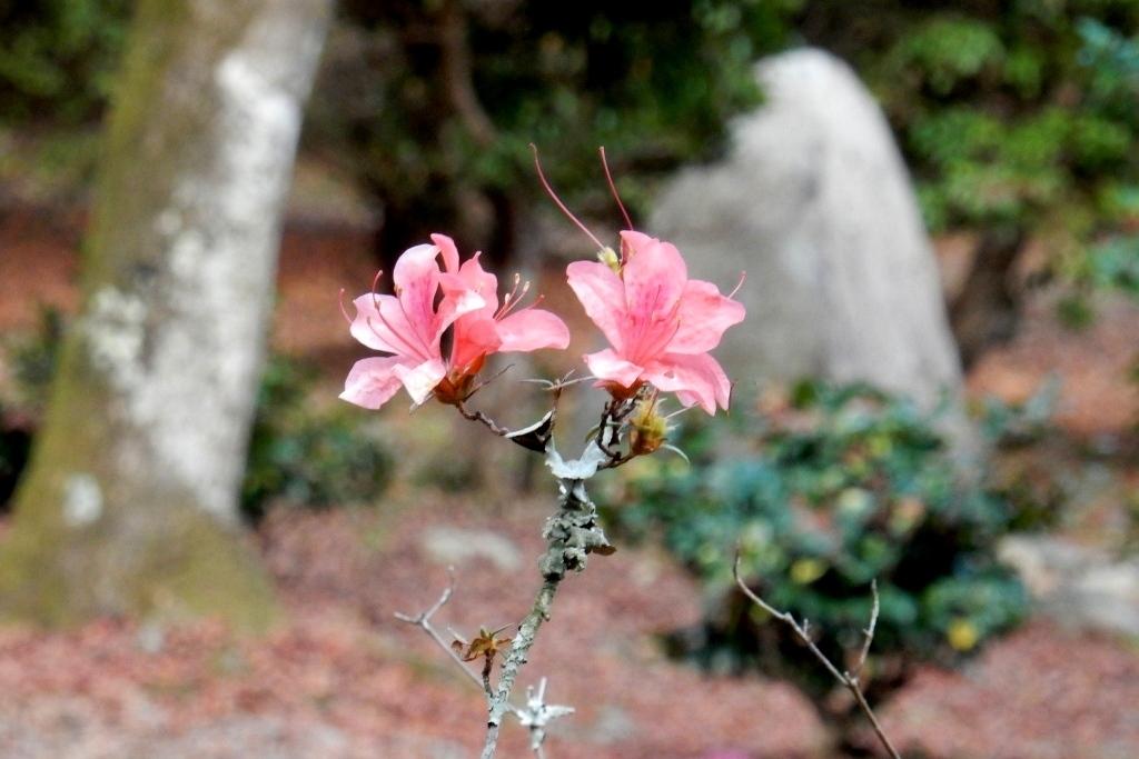 嵐山紅葉2016 029