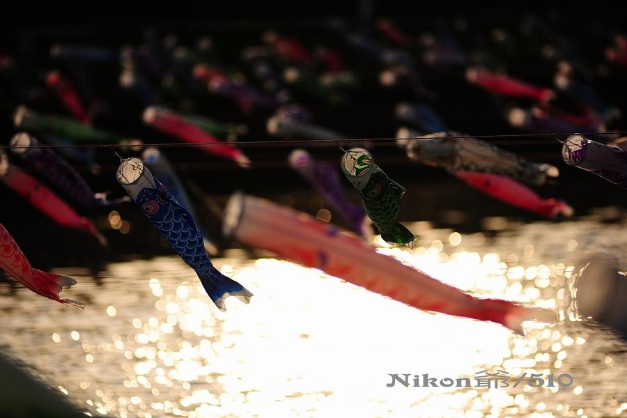鯉のぼりs_filtered