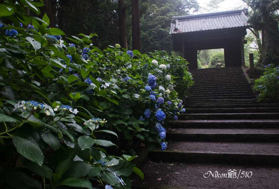 雨の大中寺sn