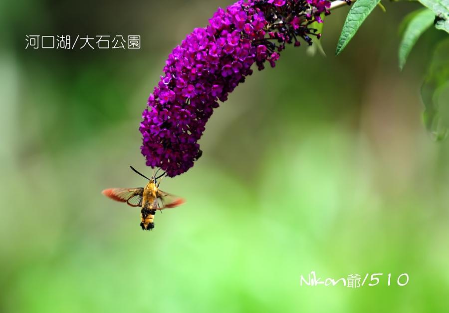 2016 07 18 河口湖4_filtered