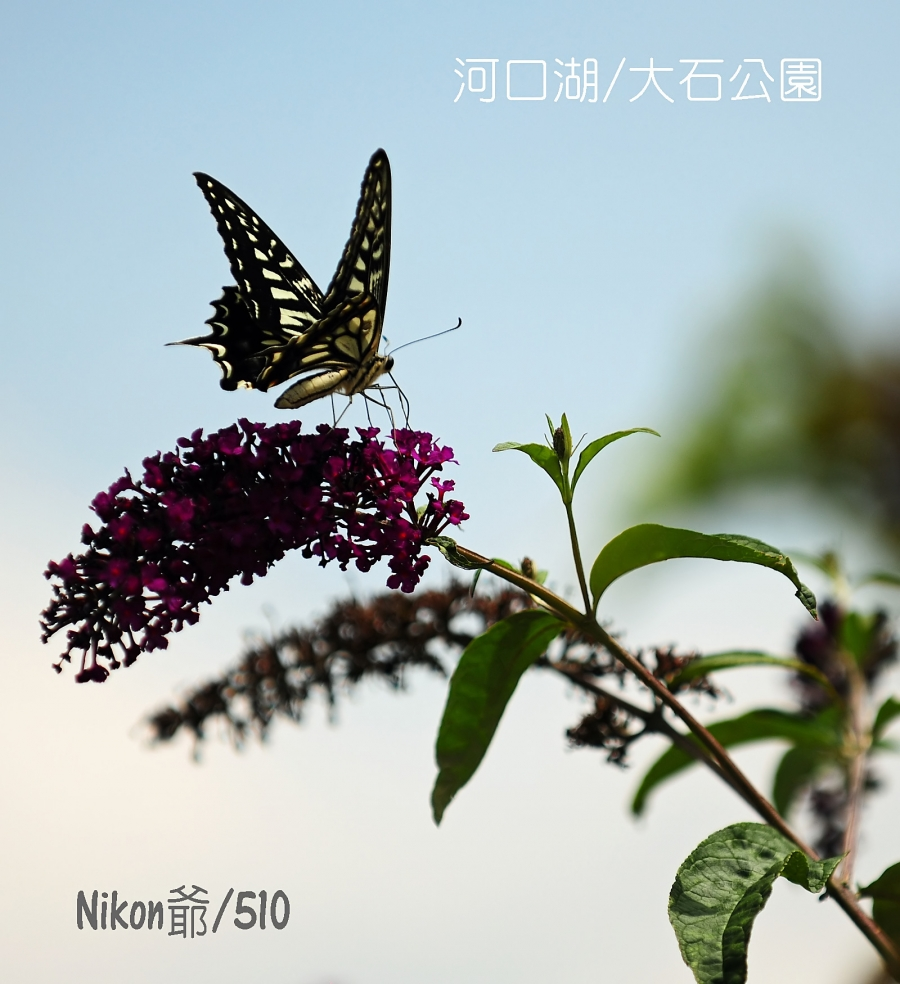 2016 07 18 河口湖 3_filtered