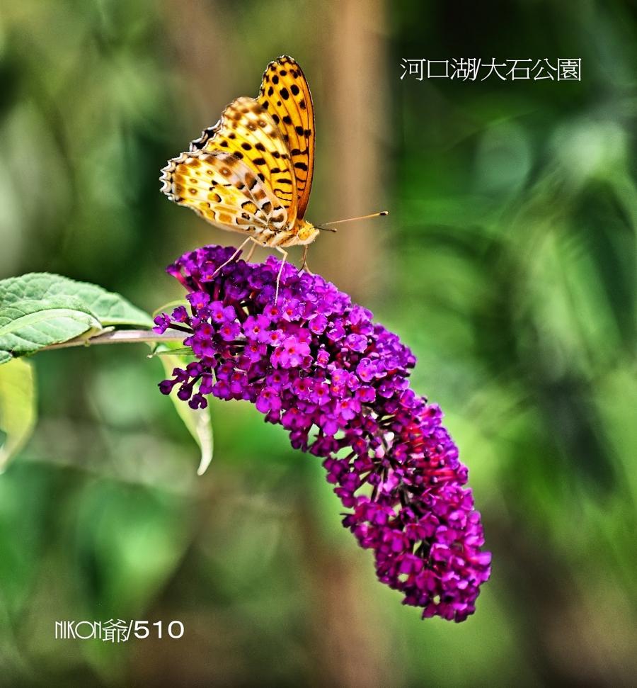 2016 07 18 河口湖2_filtered