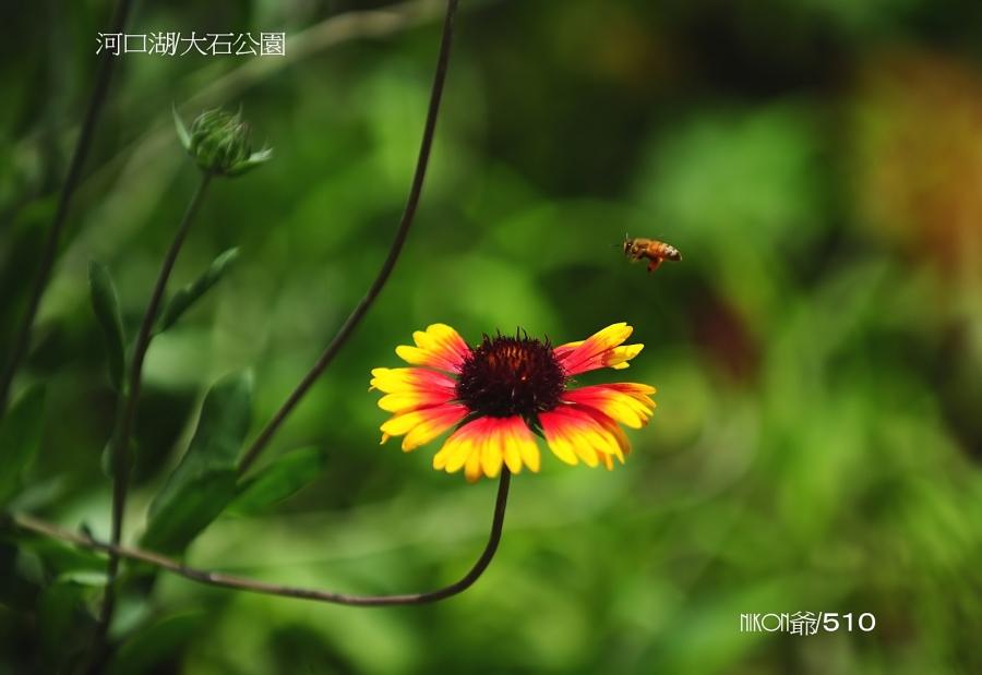 2016 07 18 河口湖_filtered