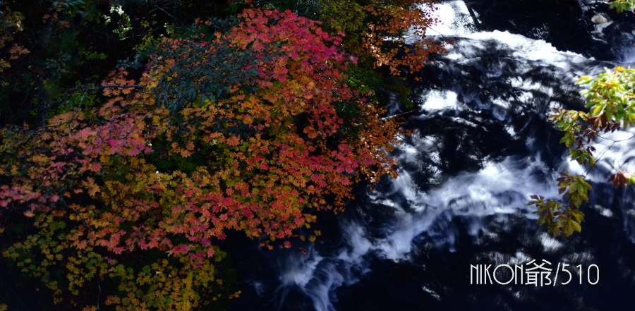 竜頭の滝 紅葉 D3x (8)sn