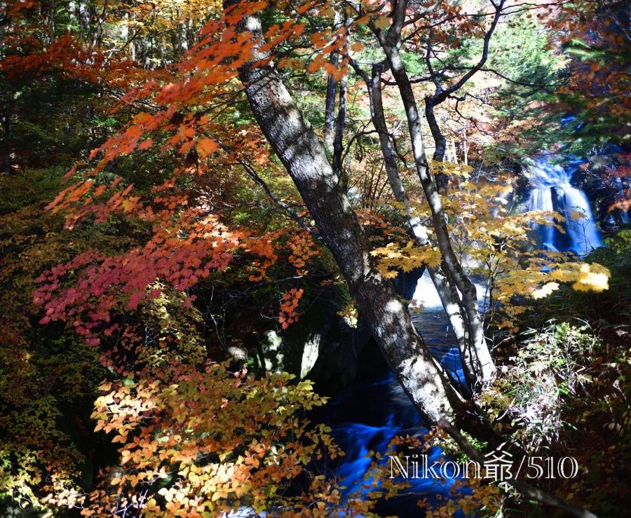 竜頭の滝 紅葉 D3x (6)sn