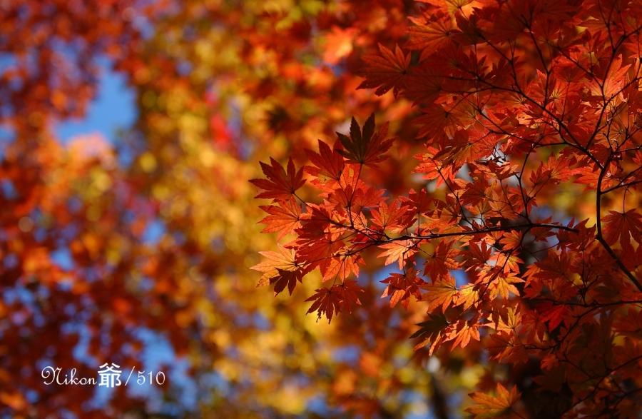 日光紅葉 D1x (14)Jpeg sn