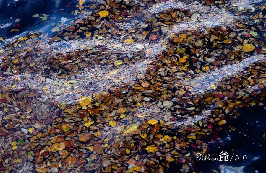 湖の落ち葉D1x sn_filtered