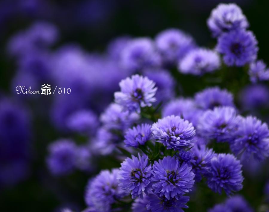 花楽園3sn