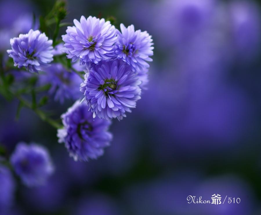 花楽園2sn