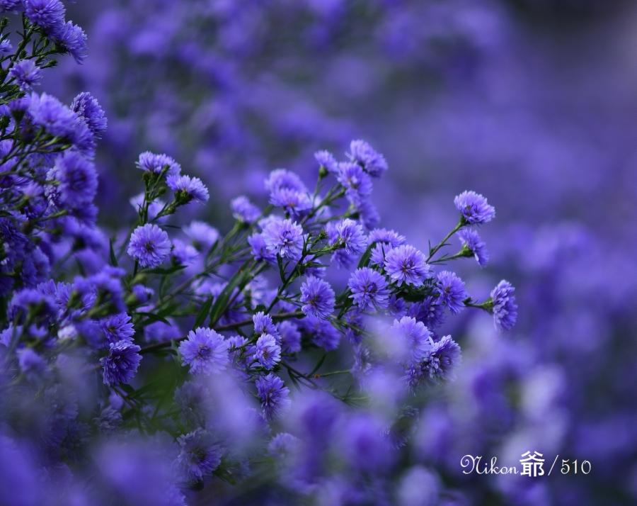 花楽園sn