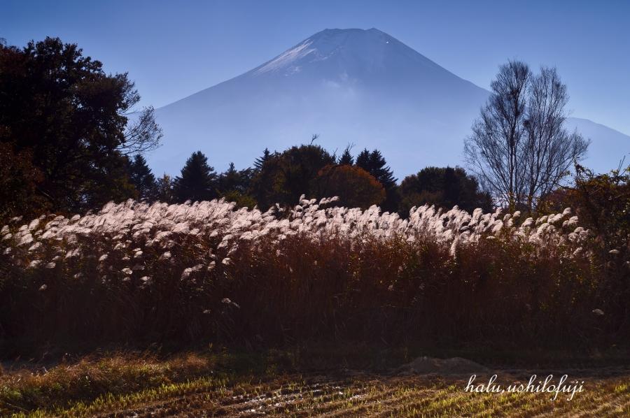 ススキ富士山  (8)sn_filtered