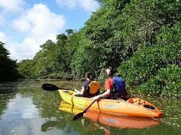 南国沖縄西表島でプロのカヤック&ネイチャーガイドにチャレンジしませんか