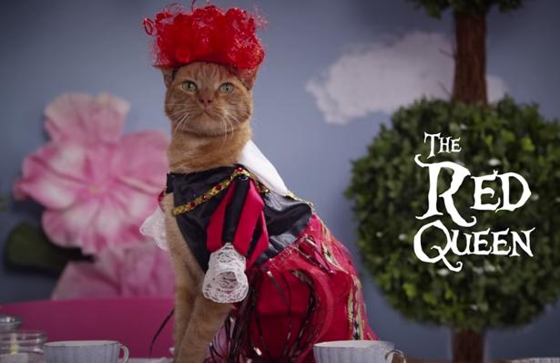 wonderland-cats-red-queen-10142016.jpg