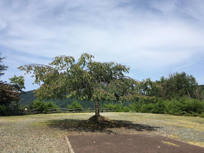 長老ヶ岳/枝垂桜