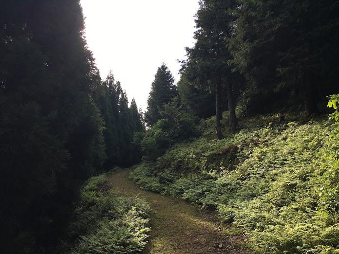 長老ヶ岳/登山道