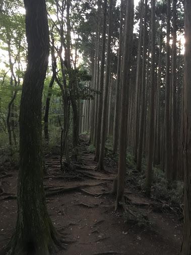 金剛山/尾根道