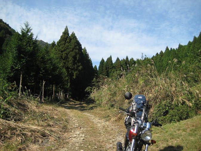白髪岳/林道