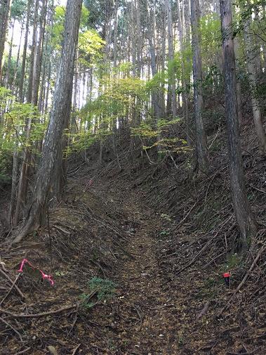 岡山三角点/登山道