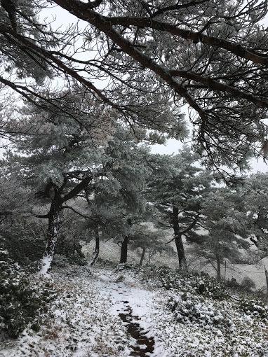 段ヶ峰/尾根道2