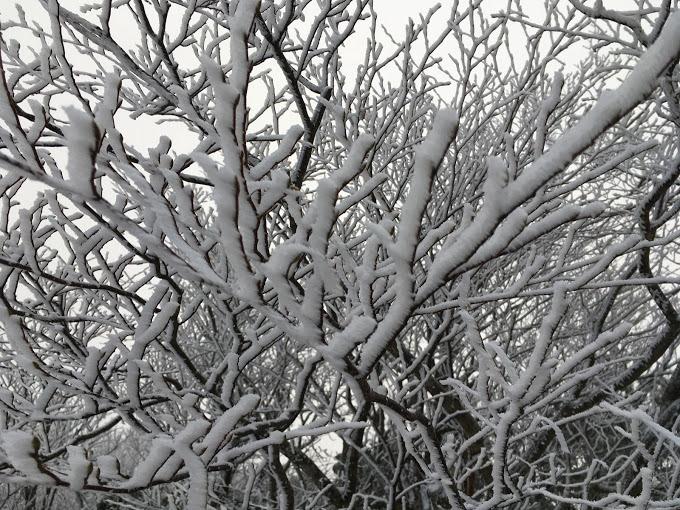 段ヶ峰/着雪2