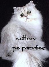 cattery1.jpg