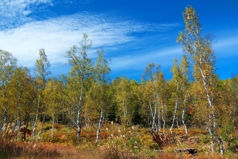 一人佇む高原の秋