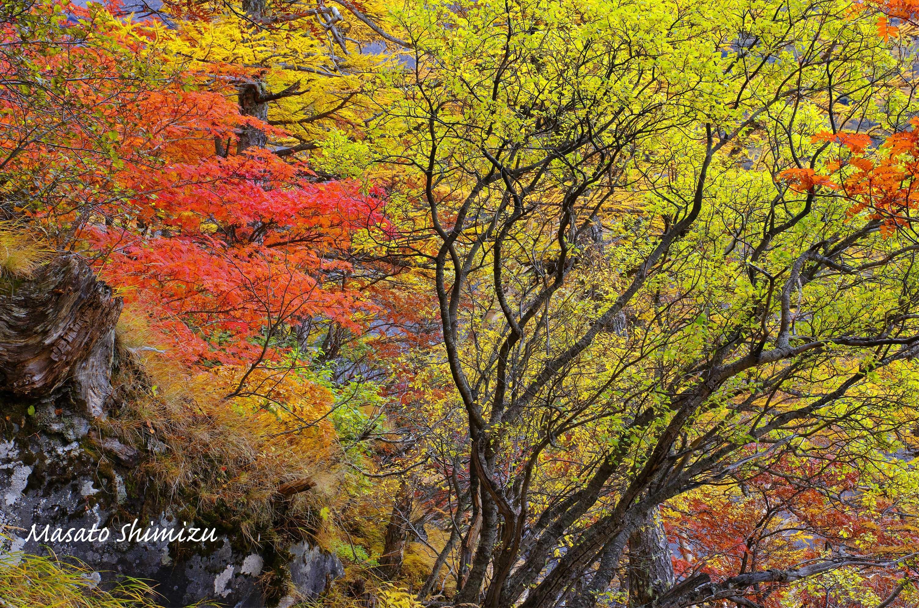 富士の森から・・