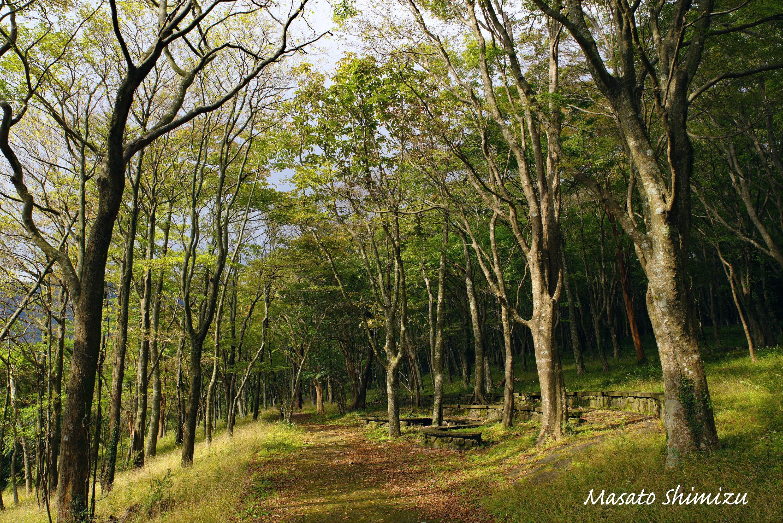 斜光の雑木林