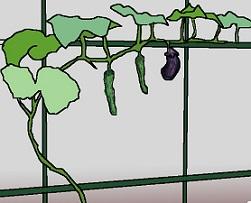 瓜の蔓に茄子は生らぬ