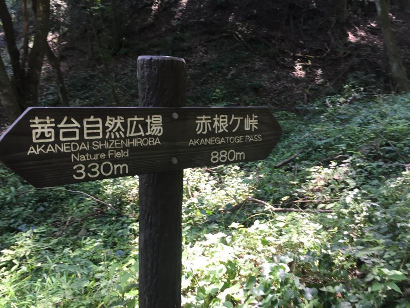 kashiwagiyama16.jpg