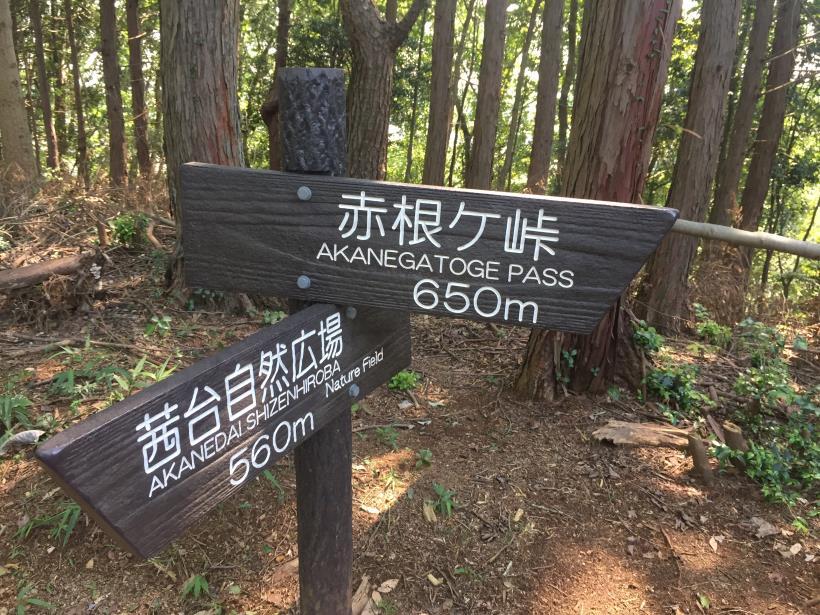 kashiwagiyama27.jpg