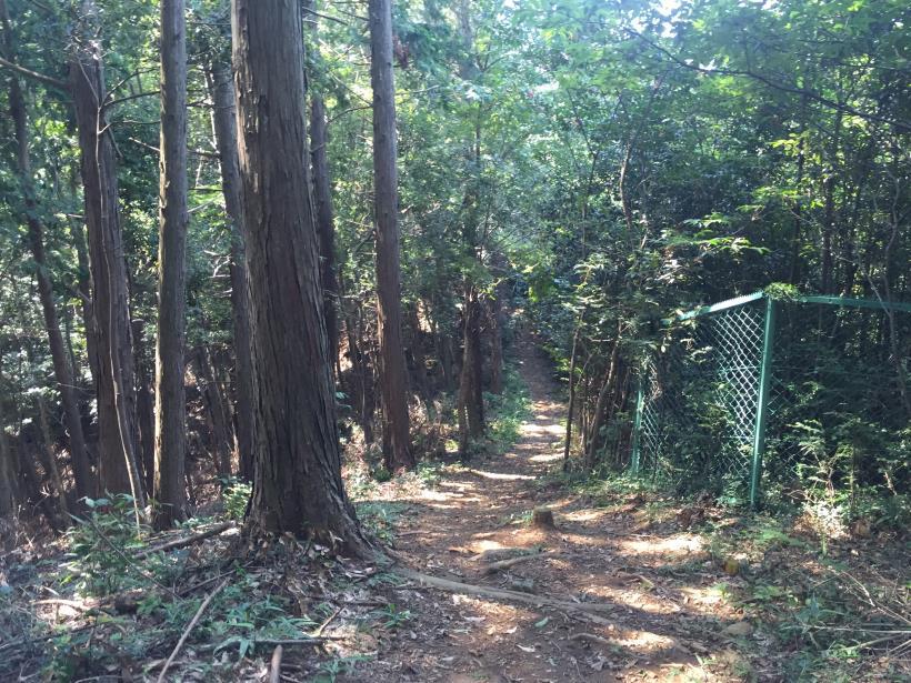 kashiwagiyama28.jpg