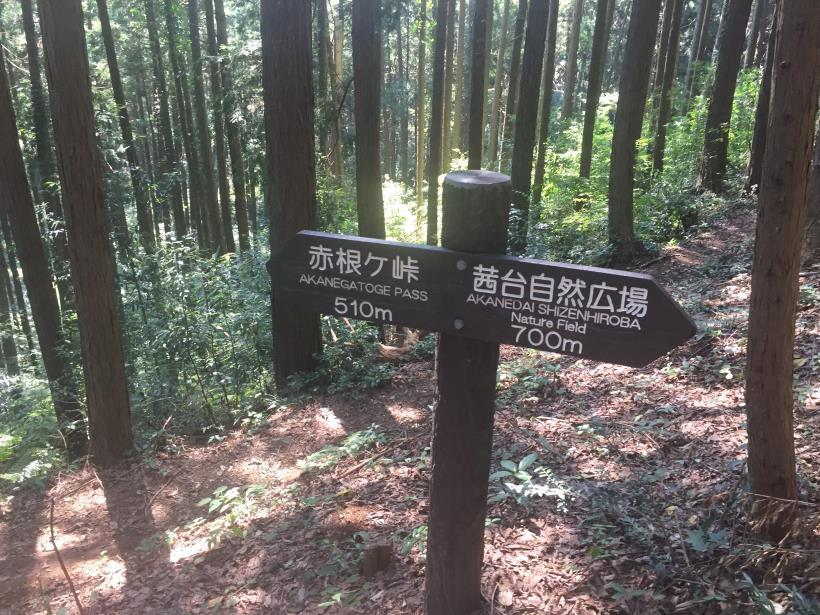 kashiwagiyama31.jpg